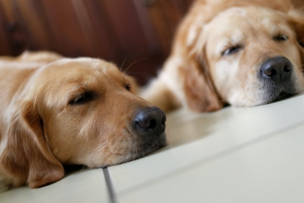 separation anxiety in dogs supplement