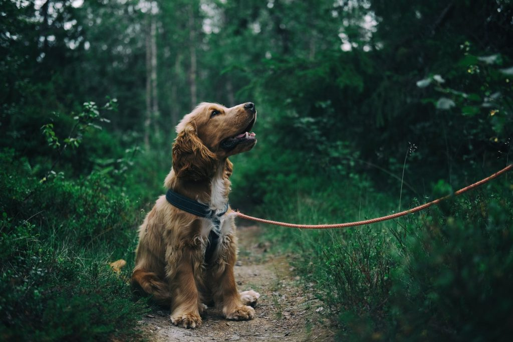 tire out your dog leash training