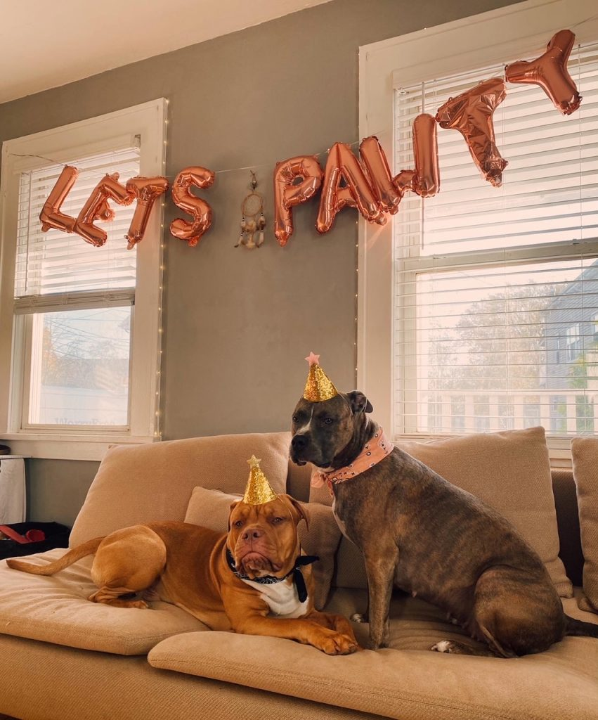 birthday party for your dog lets pawty