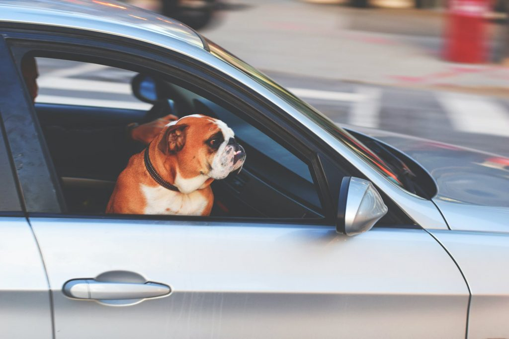 winter activities to do with your dog  car rides