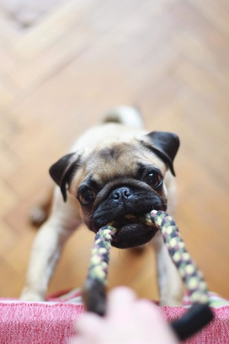 clean dog toys naturally rope toys