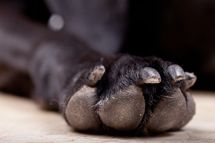 Foot Soak Recipes other paw care tips like cutting nails and trimming paw fur