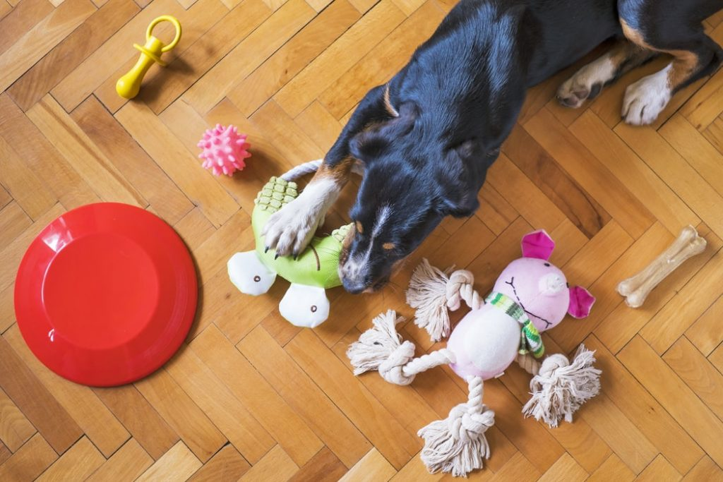 clean dog toys naturally when to throw out toys
