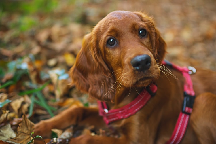 teach your dog their name and further education