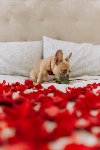 valentine's day date to have with your dog conclusion