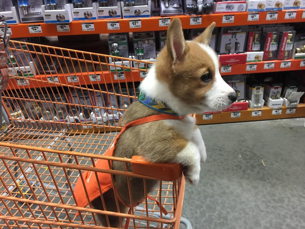 Home Depot dog friendly stores