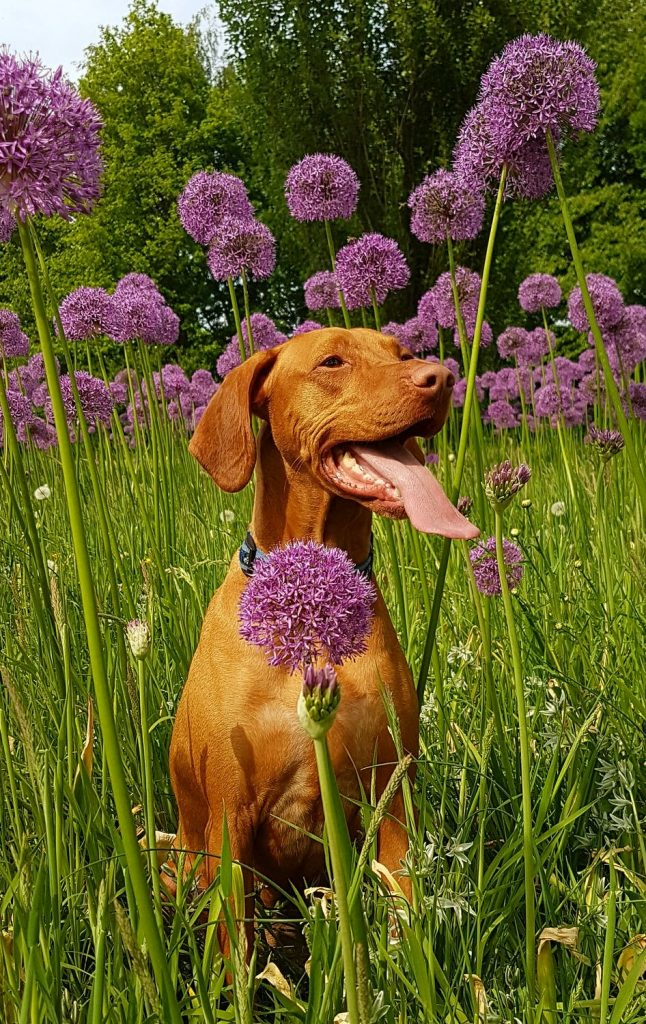 Best Spring Activities to do With Your Dog plant a garden