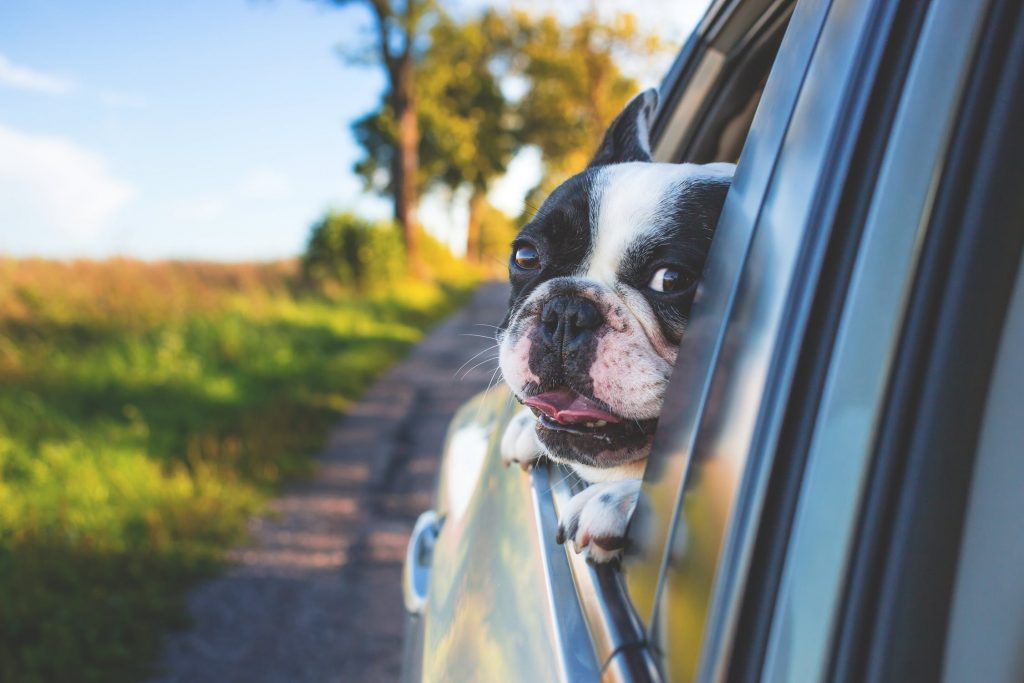 Best Spring Activities to do With Your Dog road trip