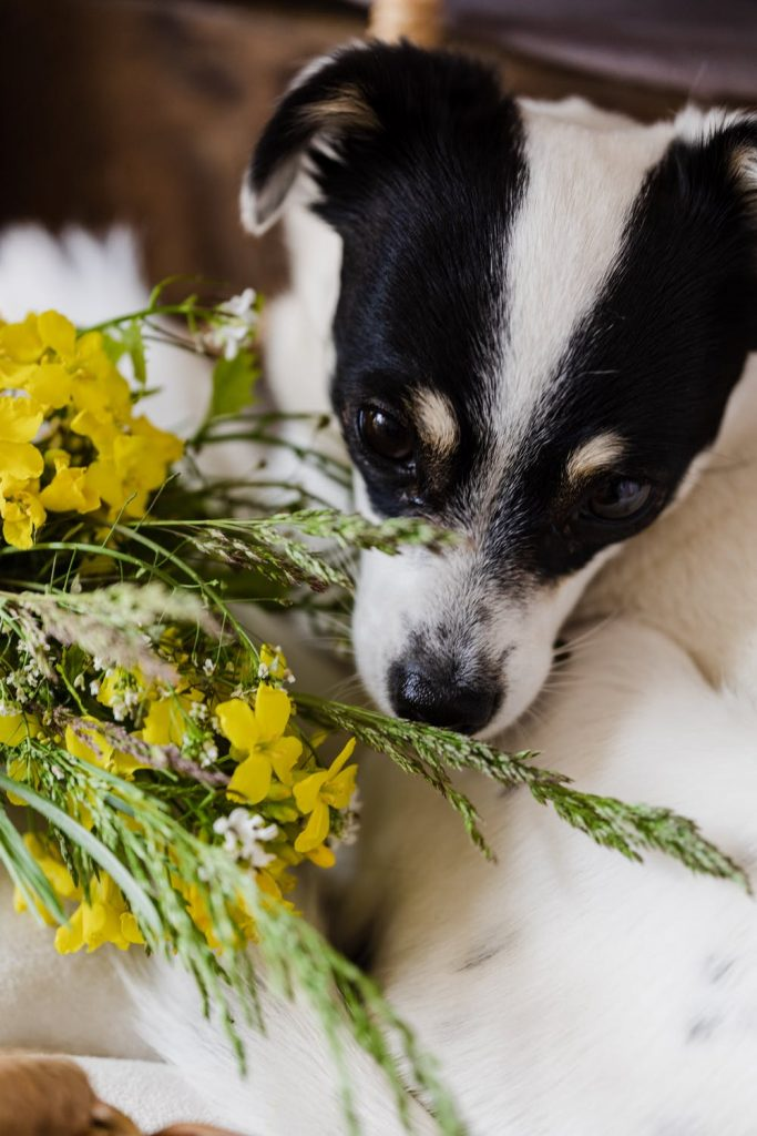 Best Spring Activities to do With Your Dog smell the flowers