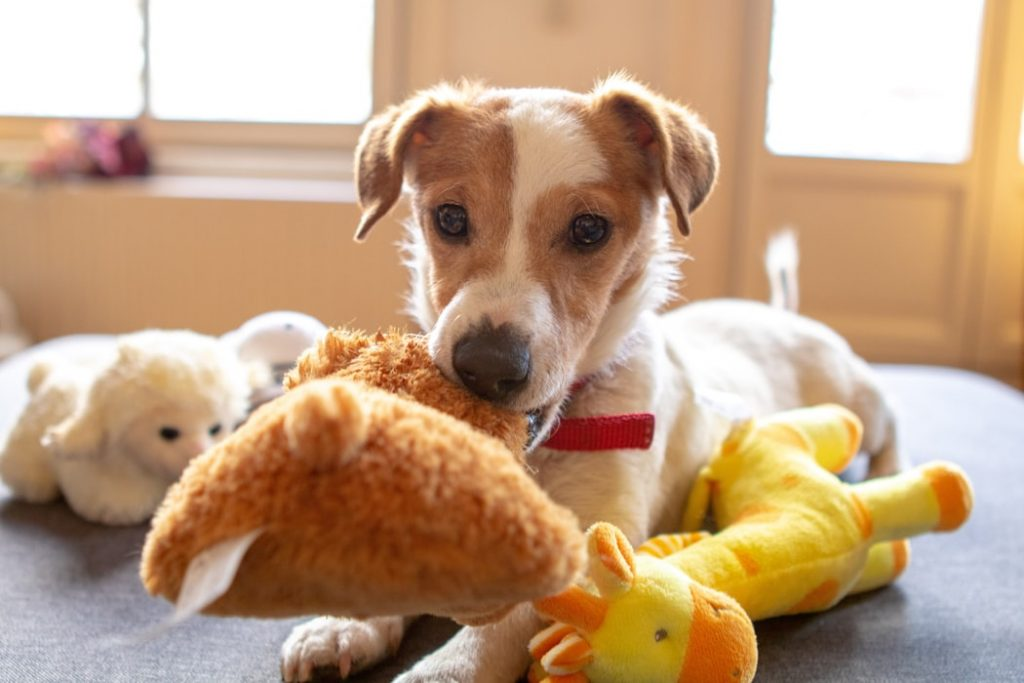 Help Your Dog During Fireworks give toy as distraction