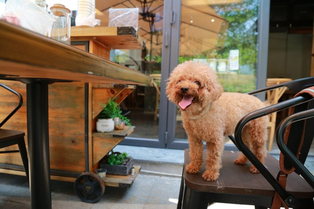 dog friendly places in florida restaurants